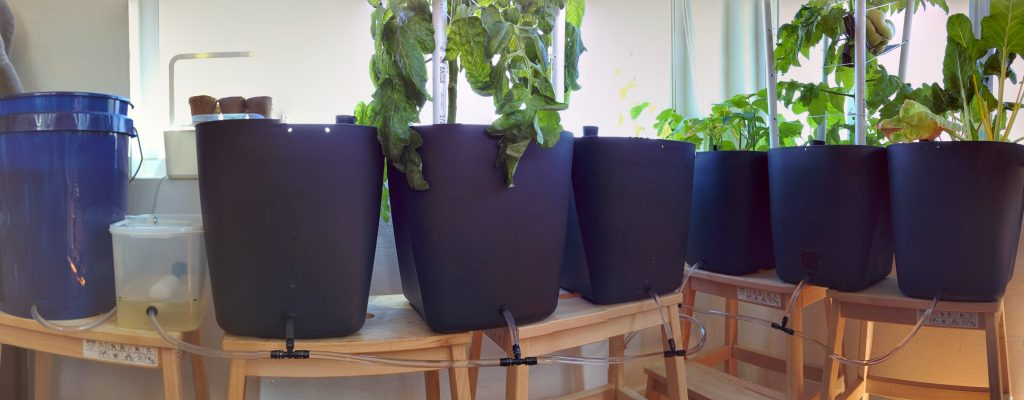 Daisy chained Nektarin self-watering pots with a central reservoir